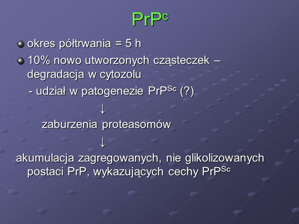 PrP c okres półtrwania = 5 h 10% nowo utworzonych cząsteczek – degradacja w cytozolu - udział w patogenezie PrP Sc (?) - udział w patogenezie PrP Sc (