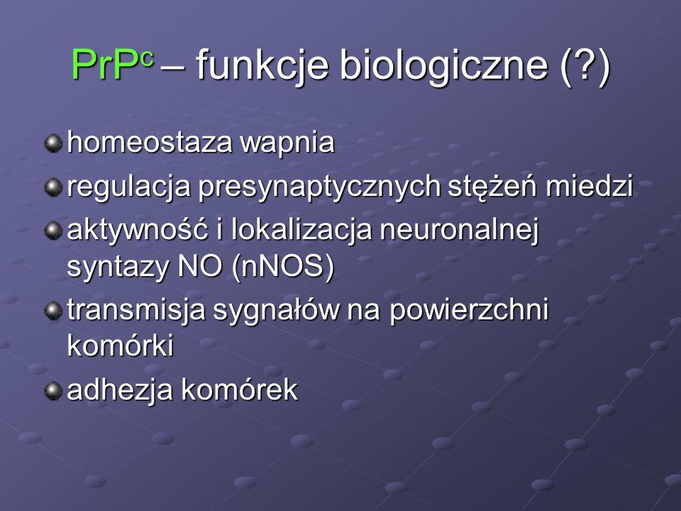 PrP c – funkcje biologiczne (?) homeostaza wapnia regulacja presynaptycznych stężeń miedzi aktywność i lokalizacja neuronalnej syntazy NO (nNOS) trans
