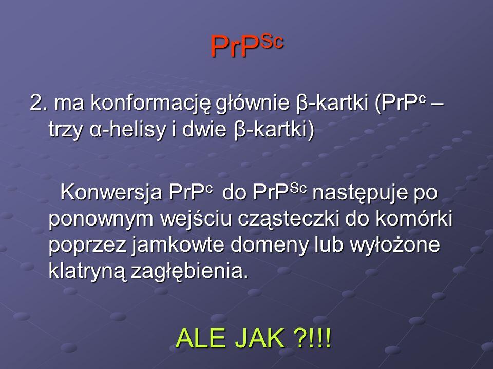 PrP Sc 2. ma konformację głównie β-kartki (PrP c – trzy α-helisy i dwie β-kartki) Konwersja PrP c do PrP Sc następuje po ponownym wejściu cząsteczki d