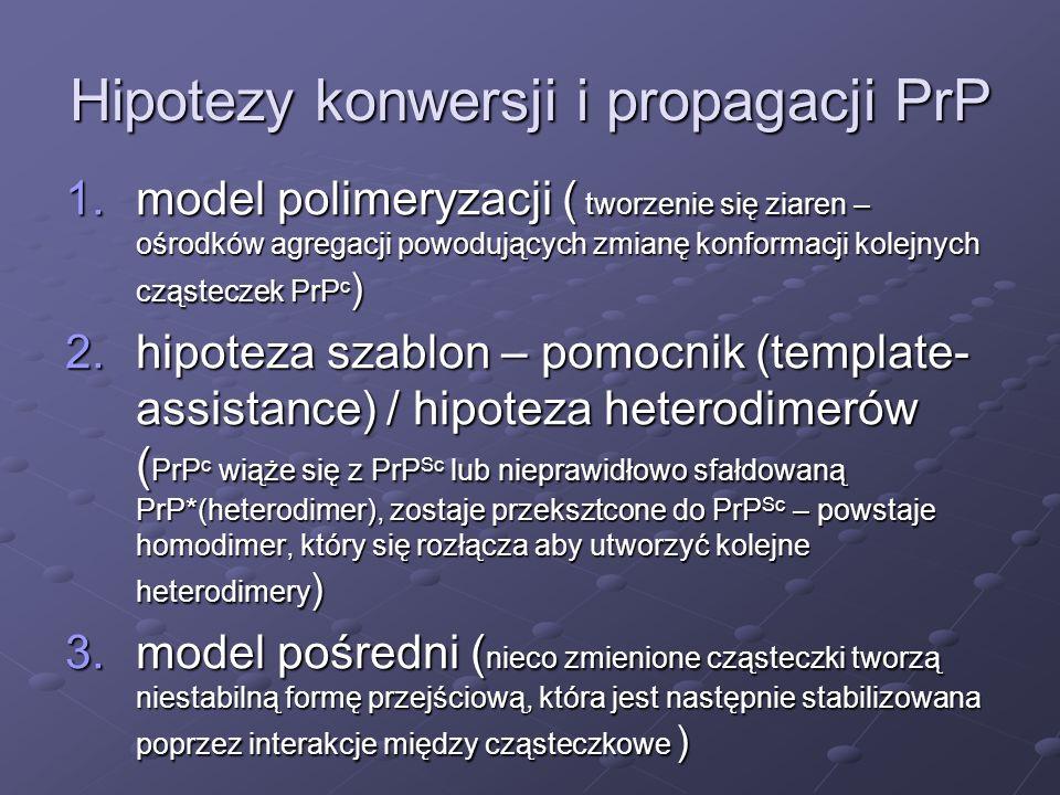 Hipotezy konwersji i propagacji PrP 1.model polimeryzacji ( tworzenie się ziaren – ośrodków agregacji powodujących zmianę konformacji kolejnych cząste