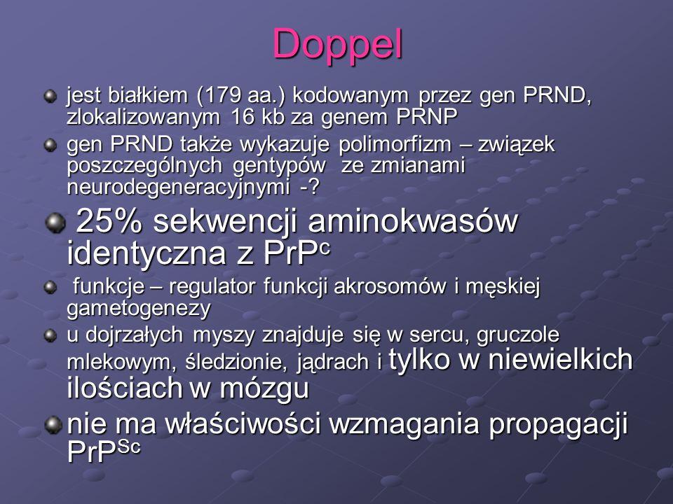 Doppel jest białkiem (179 aa.) kodowanym przez gen PRND, zlokalizowanym 16 kb za genem PRNP gen PRND także wykazuje polimorfizm – związek poszczególny