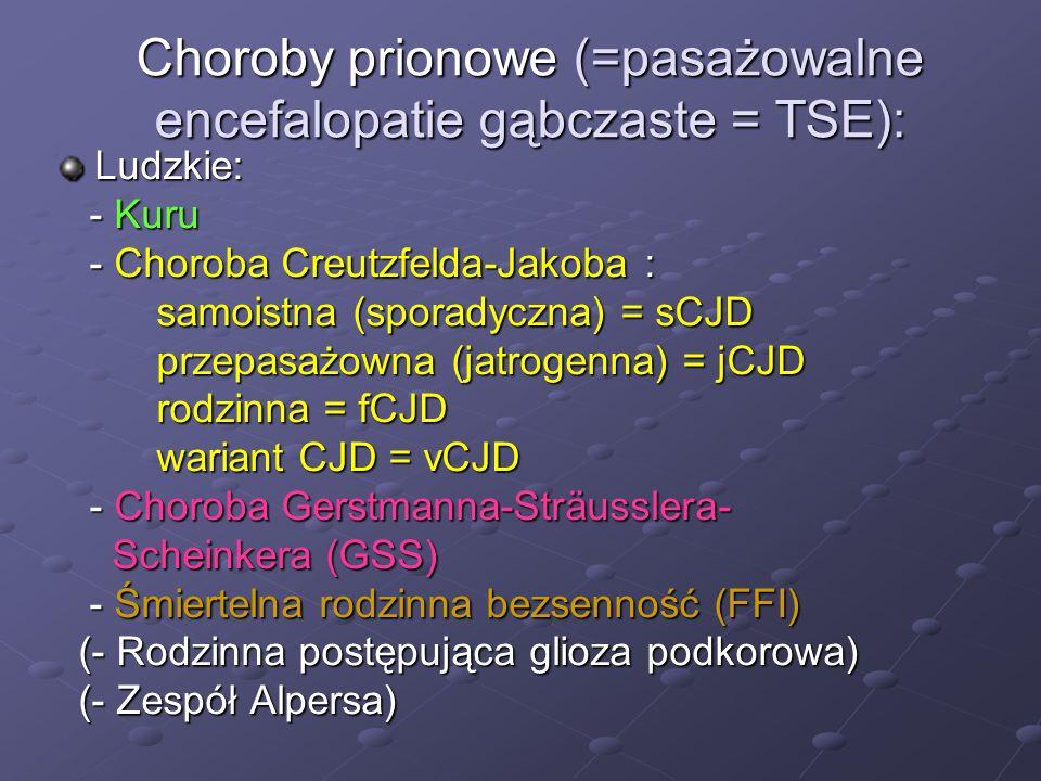 Patomorfologia złogi PrP Sc złogi PrP Sc -wykrywane immunohistochemicznie lub za pomocą Western-blott, w postaci: nieregularne/ periwakuolarne otaczające zmiany gąbczaste nieregularne/ periwakuolarne otaczające zmiany gąbczaste rozlane synaptyczne rozlane synaptyczne okołoneuronalne okołoneuronalne typu plaki – jednordzeniowe (kuru) typu plaki – jednordzeniowe (kuru) - wielordzeniowe (GSS) - wielordzeniowe (GSS) - mogą się tworzyć także w rdzeniu, w nerwach obwodowych i poza OUN ( w mięśniach szkieletowych ), w otoczeniu komórek dendrytycznych i makrofagów w ścianach naczyń