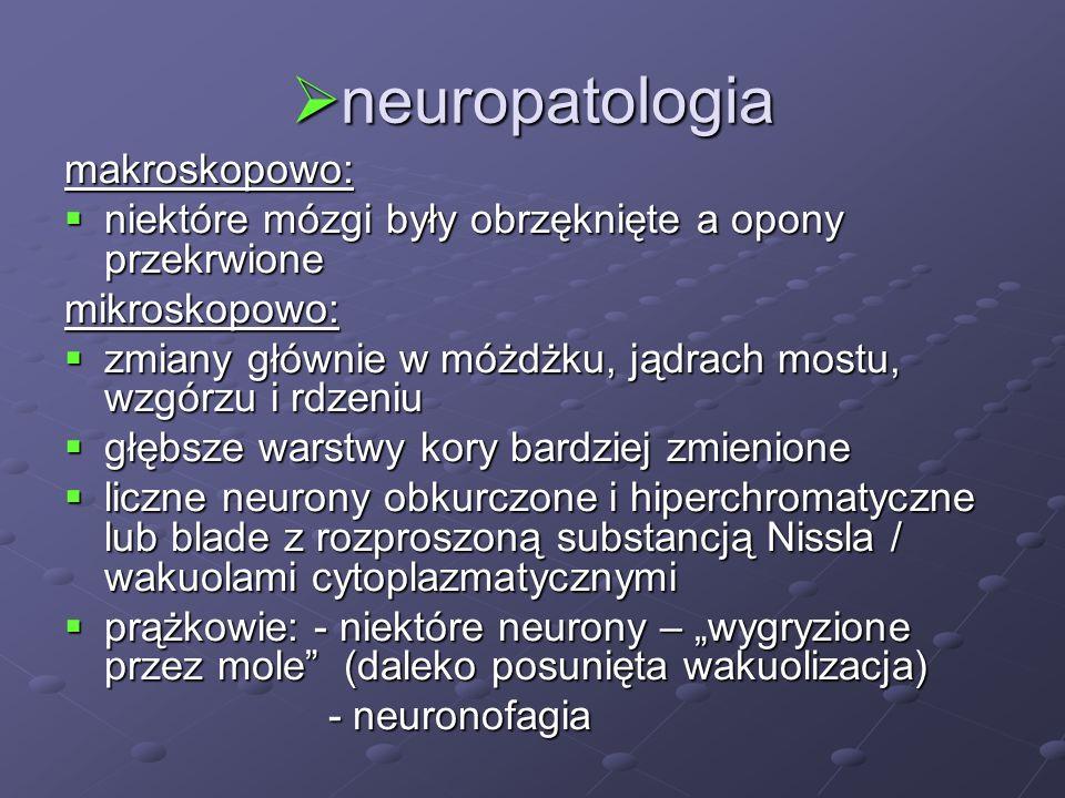 neuropatologia neuropatologia makroskopowo: niektóre mózgi były obrzęknięte a opony przekrwione niektóre mózgi były obrzęknięte a opony przekrwionemik