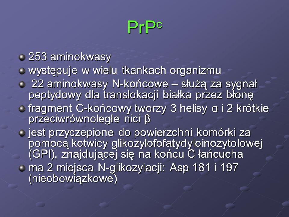 PrP c 253 aminokwasy występuje w wielu tkankach organizmu 22 aminokwasy N-końcowe – służą za sygnał peptydowy dla translokacji białka przez błonę 22 a