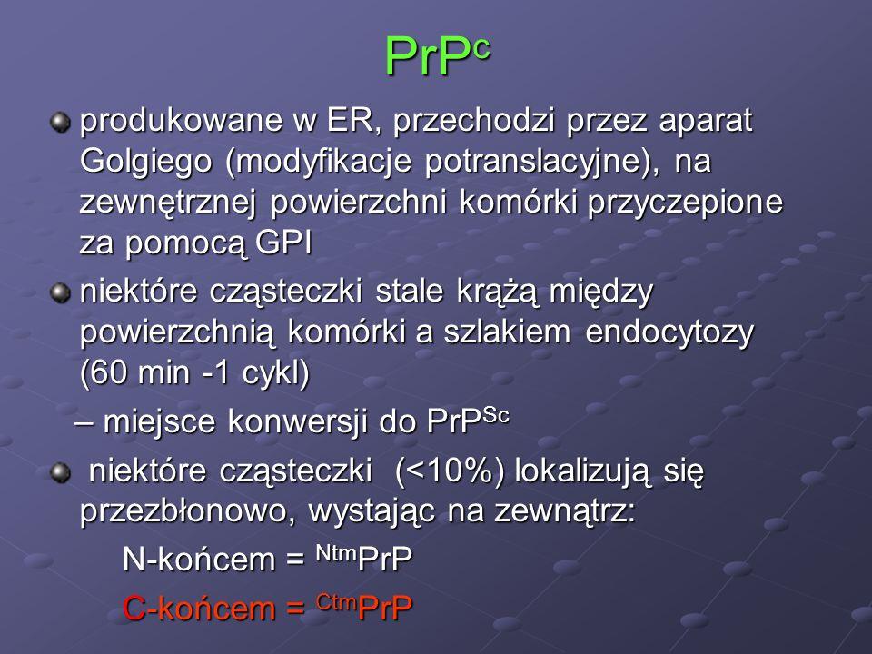 PrP c produkowane w ER, przechodzi przez aparat Golgiego (modyfikacje potranslacyjne), na zewnętrznej powierzchni komórki przyczepione za pomocą GPI n