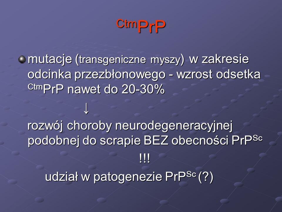 PrP c okres półtrwania = 5 h 10% nowo utworzonych cząsteczek – degradacja w cytozolu - udział w patogenezie PrP Sc (?) - udział w patogenezie PrP Sc (?) zaburzenia proteasomów zaburzenia proteasomów akumulacja zagregowanych, nie glikolizowanych postaci PrP, wykazujących cechy PrP Sc