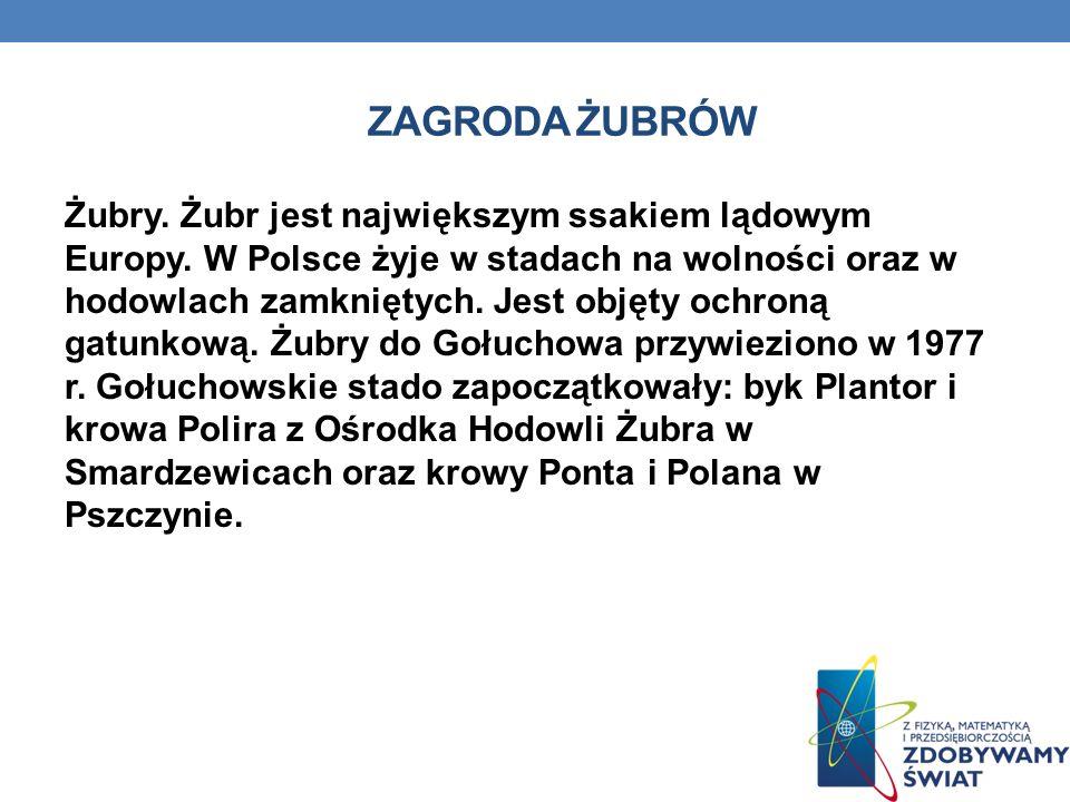 ZAGRODA ŻUBRÓW Żubry. Żubr jest największym ssakiem lądowym Europy. W Polsce żyje w stadach na wolności oraz w hodowlach zamkniętych. Jest objęty ochr