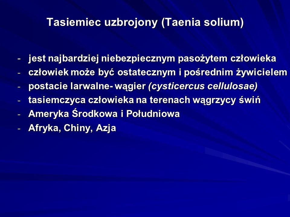 Tasiemiec uzbrojony (Taenia solium) - jest najbardziej niebezpiecznym pasożytem człowieka - człowiek może być ostatecznym i pośrednim żywicielem - pos