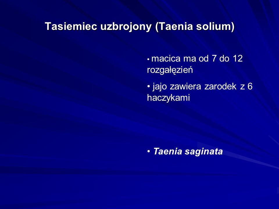 Tasiemiec uzbrojony (Taenia solium) macica ma od 7 do 12 rozgałęzień jajo zawiera zarodek z 6 haczykami Taenia saginata
