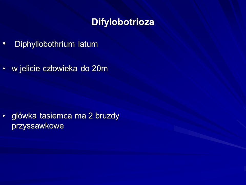 Difylobotrioza Diphyllobothrium latum Diphyllobothrium latum w jelicie człowieka do 20m w jelicie człowieka do 20m główka tasiemca ma 2 bruzdy przyssa
