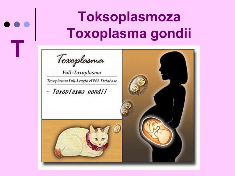 Toksoplasmoza Toxoplasma gondii T