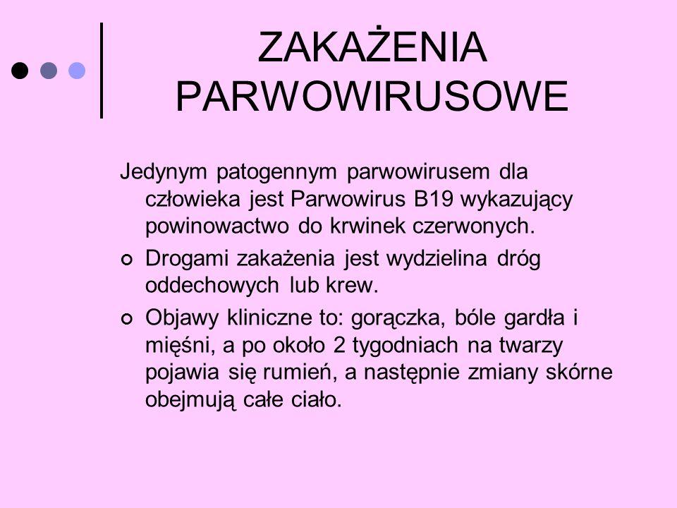 ZAKAŻENIA PARWOWIRUSOWE Jedynym patogennym parwowirusem dla człowieka jest Parwowirus B19 wykazujący powinowactwo do krwinek czerwonych. Drogami zakaż