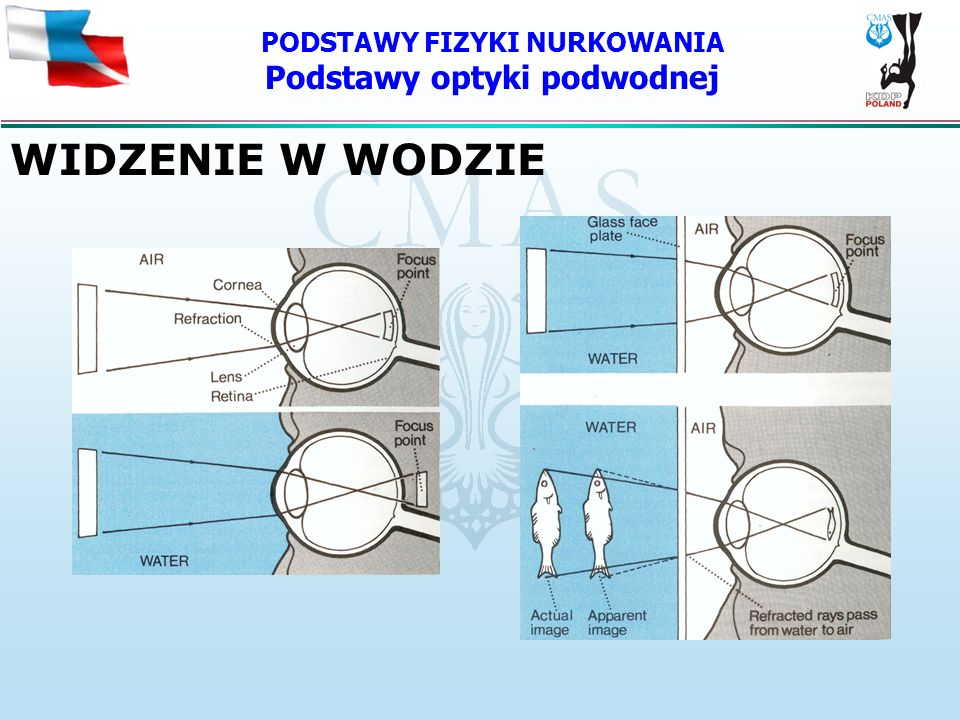 PODSTAWY FIZYKI NURKOWANIA Podstawy optyki podwodnej WIDZENIE W WODZIE
