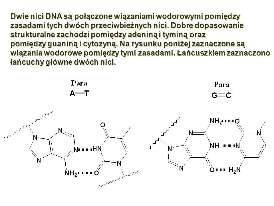 Dwie nici DNA są połączone wiązaniami wodorowymi pomiędzy zasadami tych dwóch przeciwbieżnychnici. Dobre dopasowanie strukturalne zachodzi pomiędzy ad