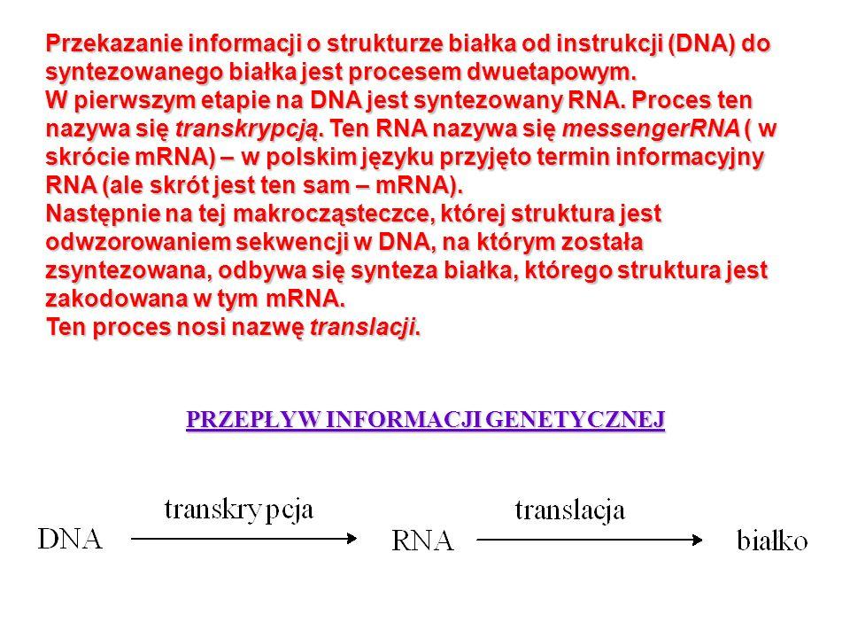 Przekazanie informacji o strukturze białka od instrukcji (DNA) do syntezowanego białka jest procesem dwuetapowym. W pierwszym etapie na DNA jest synte