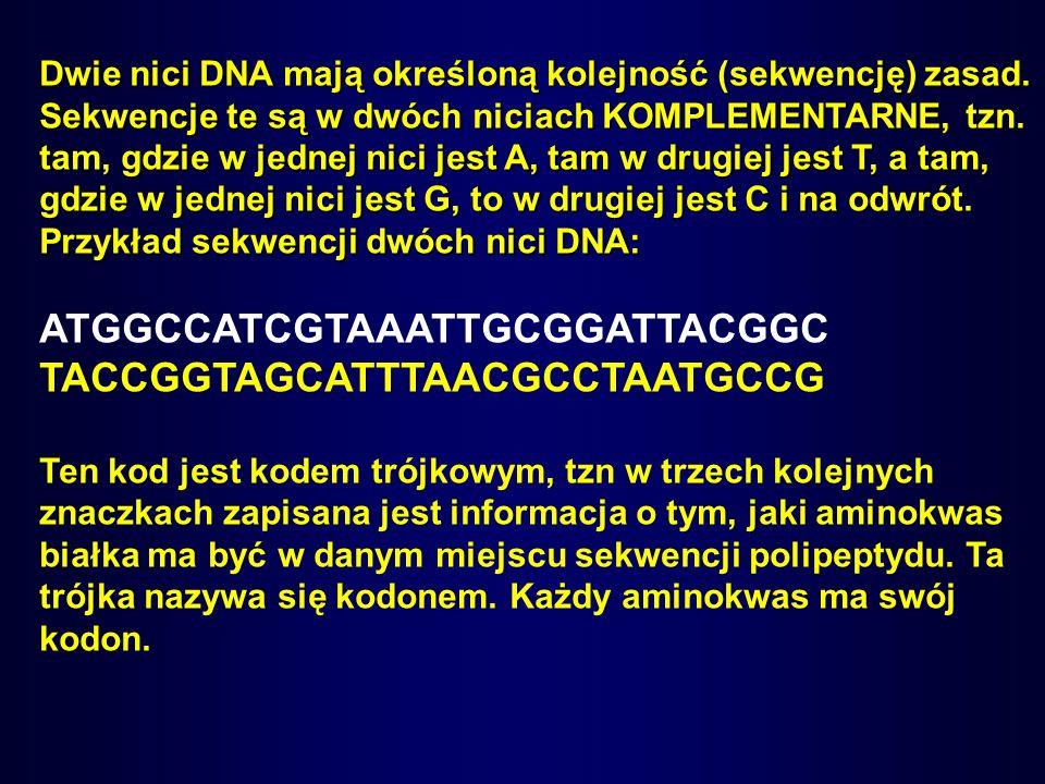Dwie nici DNA mają określoną kolejność (sekwencję) zasad. Sekwencje te są w dwóch niciach KOMPLEMENTARNE, tzn. tam, gdzie w jednej nici jest A, tam w