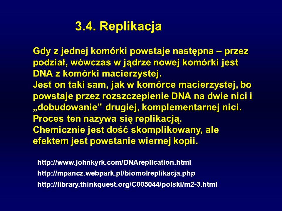 3.4. Replikacja Gdy z jednej komórki powstaje następna – przez podział, wówczas w jądrze nowej komórki jest DNA z komórki macierzystej. Jest on taki s