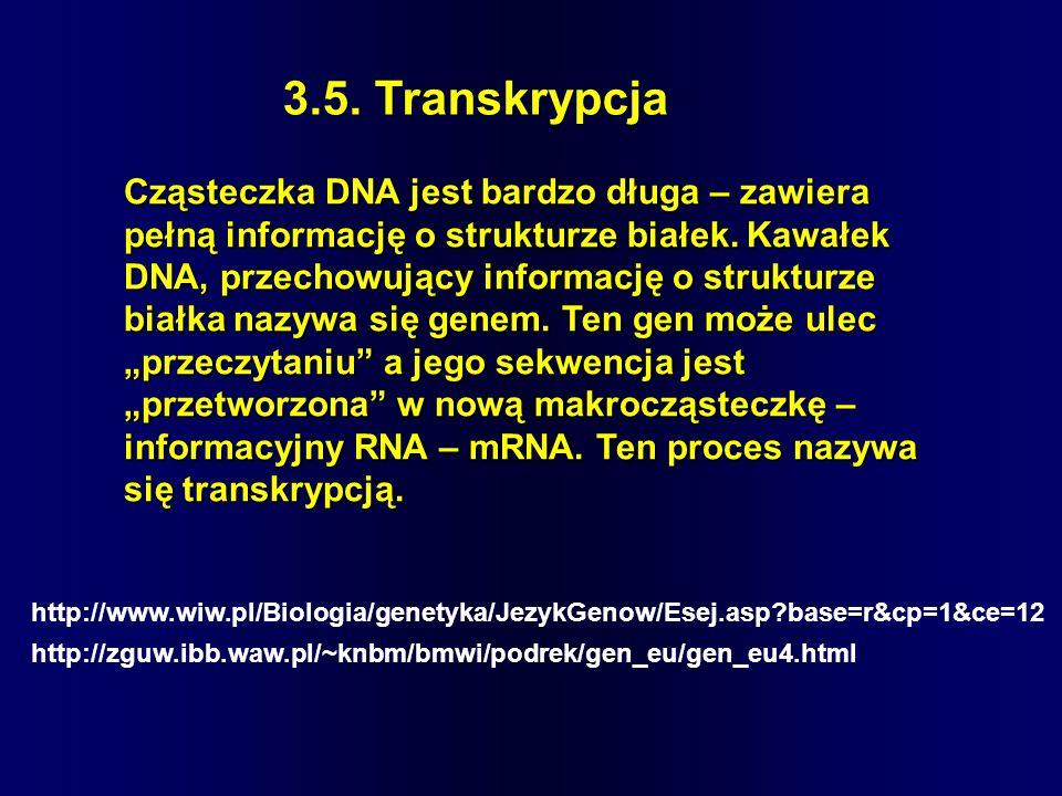 3.5. Transkrypcja Cząsteczka DNA jest bardzo długa – zawiera pełną informację o strukturze białek. Kawałek DNA, przechowujący informację o strukturze