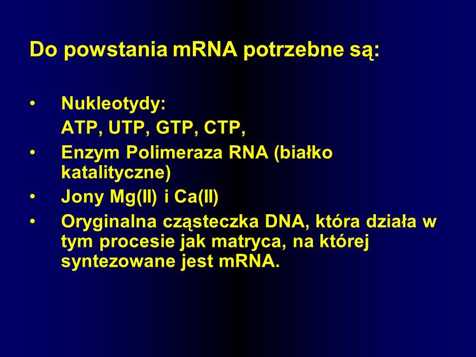 Do powstania mRNA potrzebne są: Nukleotydy: ATP, UTP, GTP, CTP, Enzym Polimeraza RNA (białko katalityczne) Jony Mg(II) i Ca(II) Oryginalna cząsteczka