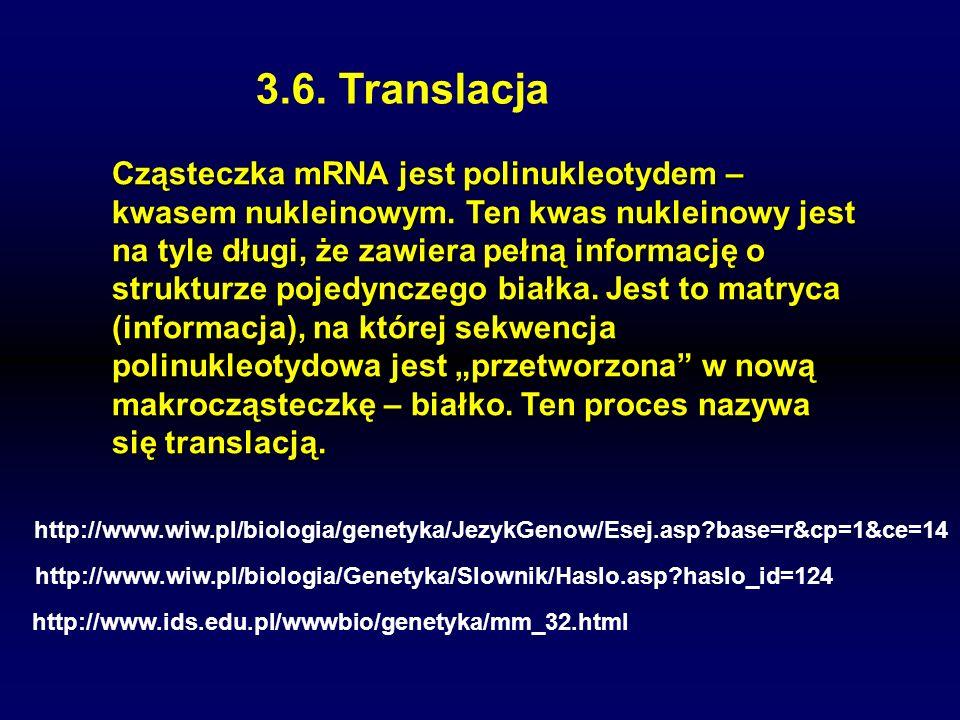 3.6. Translacja Cząsteczka mRNA jest polinukleotydem – kwasem nukleinowym. Ten kwas nukleinowy jest na tyle długi, że zawiera pełną informację o struk