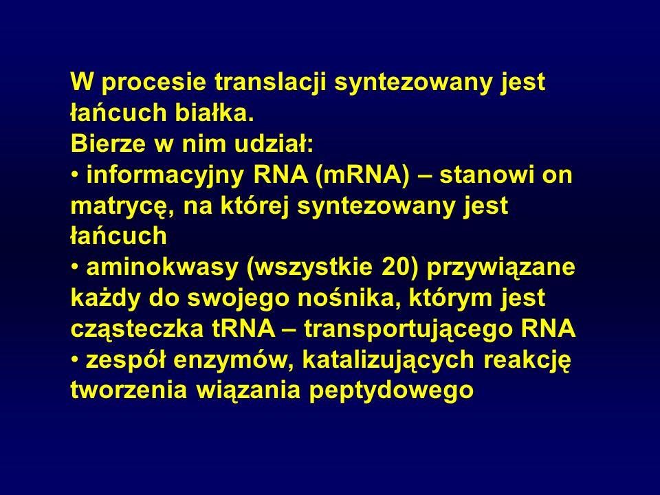 W procesie translacji syntezowany jest łańcuch białka. Bierze w nim udział: informacyjny RNA (mRNA) – stanowi on matrycę, na której syntezowany jest ł