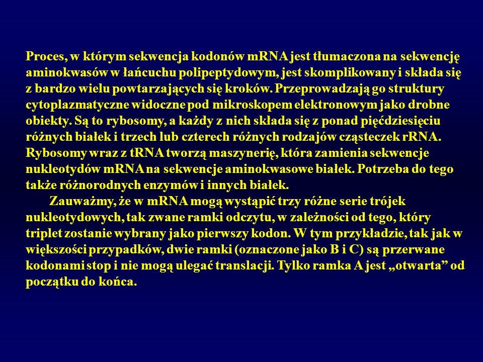 Proces, w którym sekwencja kodonów mRNA jest tłumaczona na sekwencję aminokwasów w łańcuchu polipeptydowym, jest skomplikowany i składa się z bardzo w