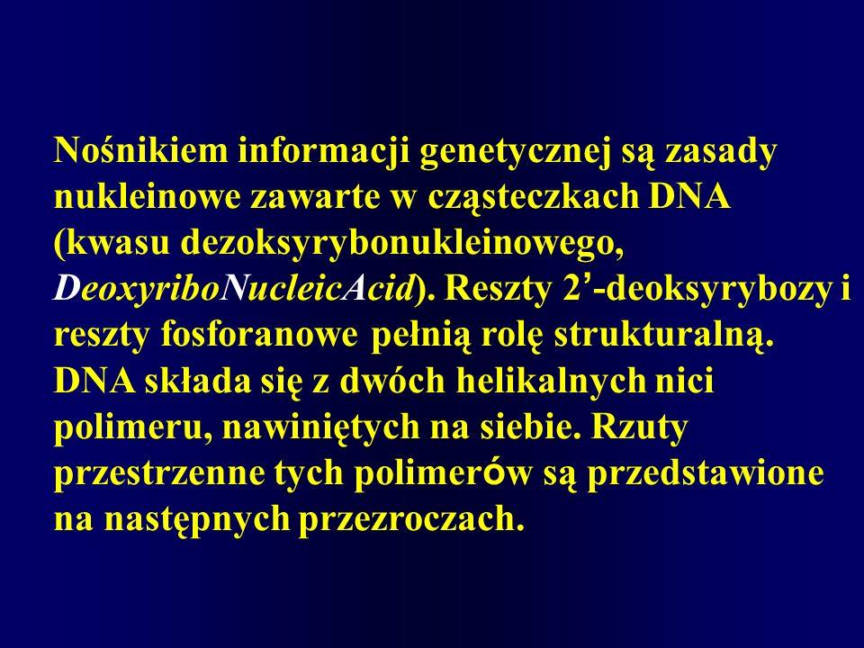 Nośnikiem informacji genetycznej są zasady nukleinowe zawarte w cząsteczkach DNA (kwasu dezoksyrybonukleinowego, DeoxyriboNucleicAcid). Reszty 2 -deok