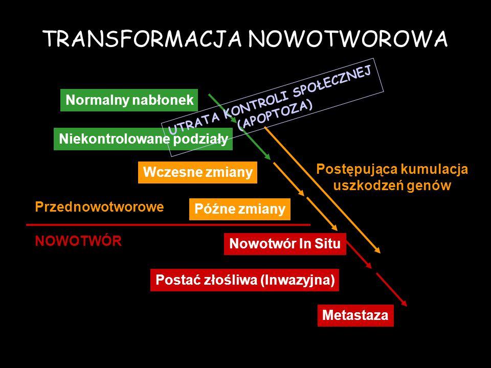 Niekontrolowane podziały Wczesne zmiany Późne zmiany NOWOTWÓR Nowotwór In Situ Postać złośliwa (Inwazyjna) Normalny nabłonek Przednowotworowe Metastaz
