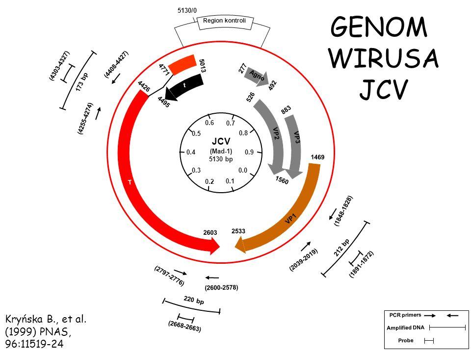 WYKRYWANIE METODĄ PCR DNA JCV W RDZENIAKACH MÓŻDŻKU Obszar kodujący wczesne geny (N-koniec antygenu T) Obszar kodujący wczesne geny, (C-koniec antygenu T) Obszar kodujący późne geny (białko kapsydu VP1) Kryńska B., et al.