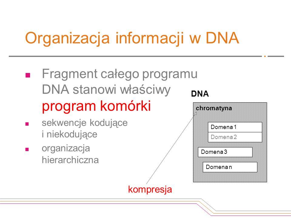 Organizacja informacji w DNA Fragment całego programu DNA stanowi właściwy program komórki sekwencje kodujące i niekodujące organizacja hierarchiczna