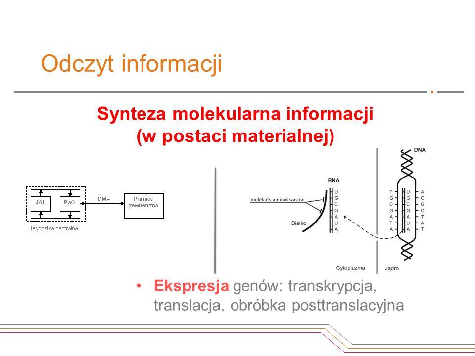Odczyt informacji Synteza molekularna informacji (w postaci materialnej) Ekspresja genów: transkrypcja, translacja, obróbka posttranslacyjna