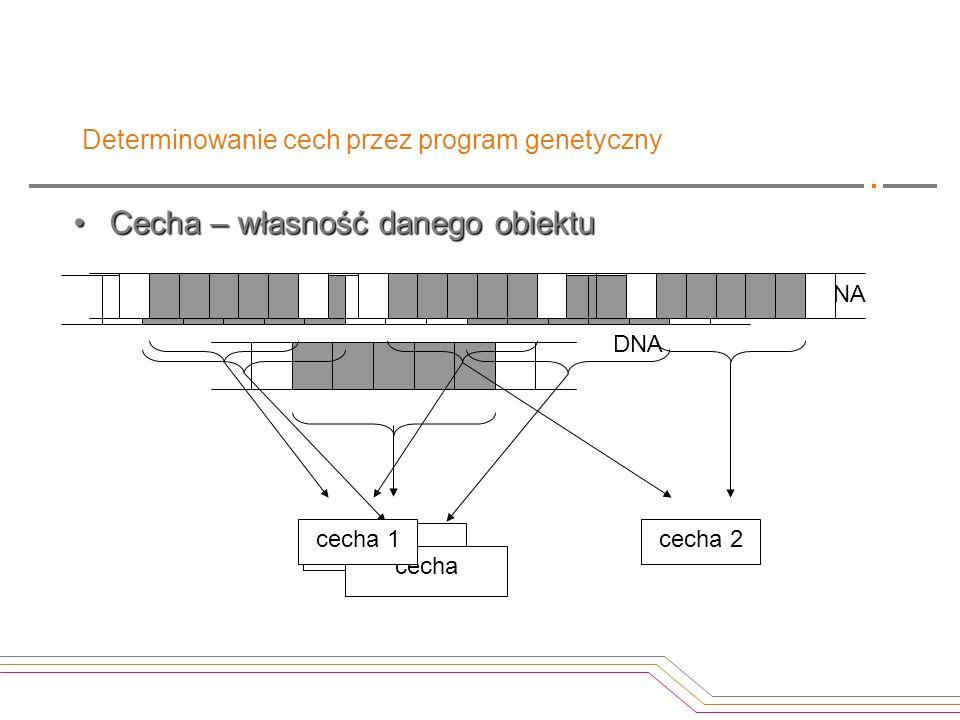 Determinowanie cech przez program genetyczny Cecha – własność danego obiektuCecha – własność danego obiektu cecha DNA cecha DNA cecha 1cecha 2