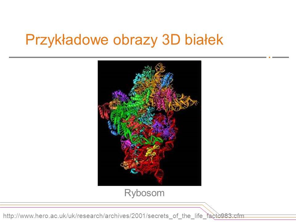 Przykładowe obrazy 3D białek Rybosom http://www.hero.ac.uk/uk/research/archives/2001/secrets_of_the_life_facto983.cfm