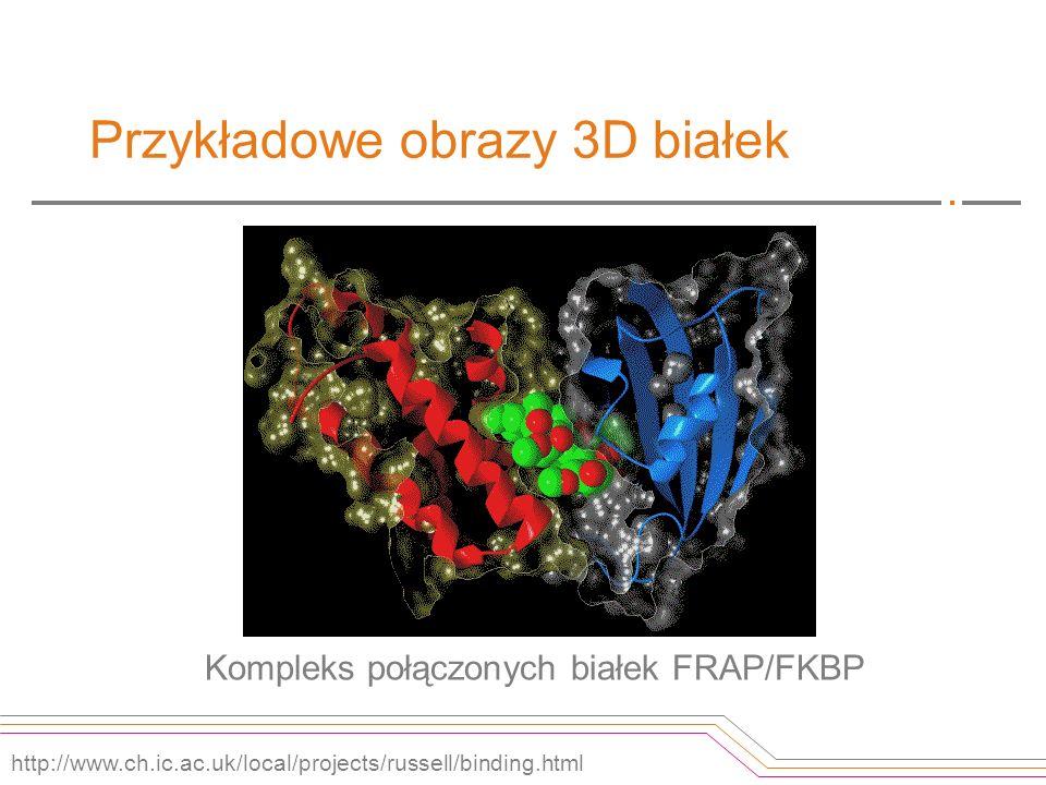 Przykładowe obrazy 3D białek Kompleks połączonych białek FRAP/FKBP http://www.ch.ic.ac.uk/local/projects/russell/binding.html