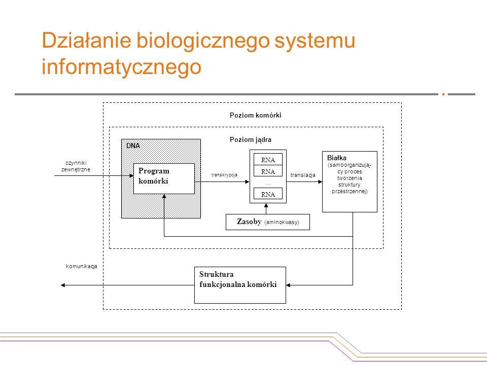 Działanie biologicznego systemu informatycznego DNA Program komórki translacja RNA... RNA Białka (samoorganizują- cy proces tworzenia struktury przest