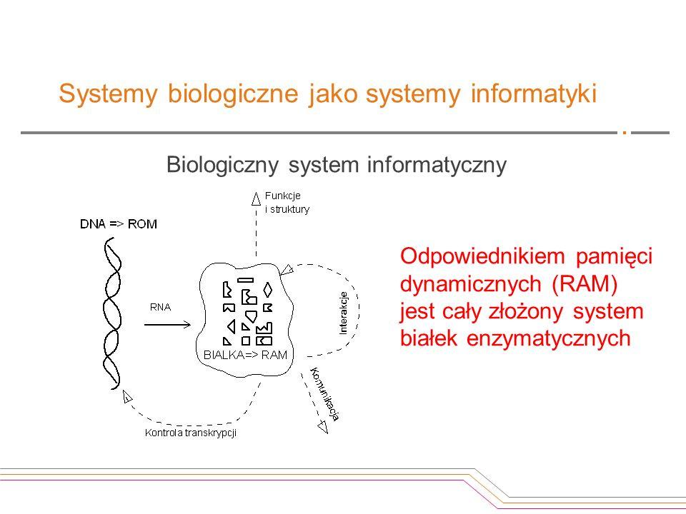 Systemy biologiczne jako systemy informatyki Biologiczny system informatyczny Odpowiednikiem pamięci dynamicznych (RAM) jest cały złożony system białe