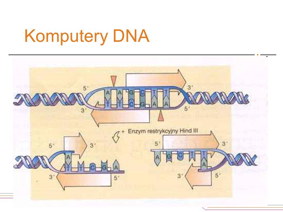 Komputery DNA Jakimi dysponujemy narzędziami? - Enzymy restrykcyjne – nożyczki do cięcia DNA w ściśle określonych miejscach; - Ligazy – enzymy łączące