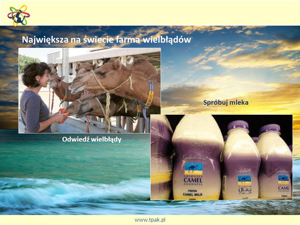 Największa na świecie farma wielbłądów Odwiedź wielbłądy Spróbuj mleka www.tpak.pl
