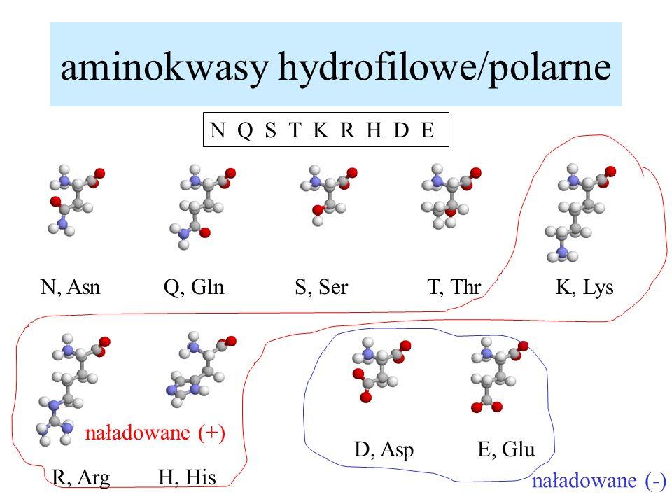aminokwasy hydrofilowe/polarne N Q S T K R H D E N, AsnQ, GlnS, SerT, ThrK, Lys R, ArgH, His D, AspE, Glu naładowane (+) naładowane (-)