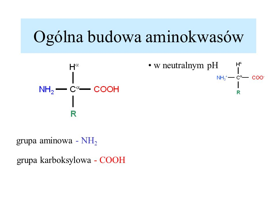 Ogólna budowa aminokwasów grupa aminowa - NH 2 grupa karboksylowa - COOH w neutralnym pH