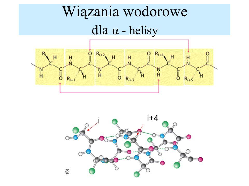 Wiązania wodorowe dla α - helisy i i+4