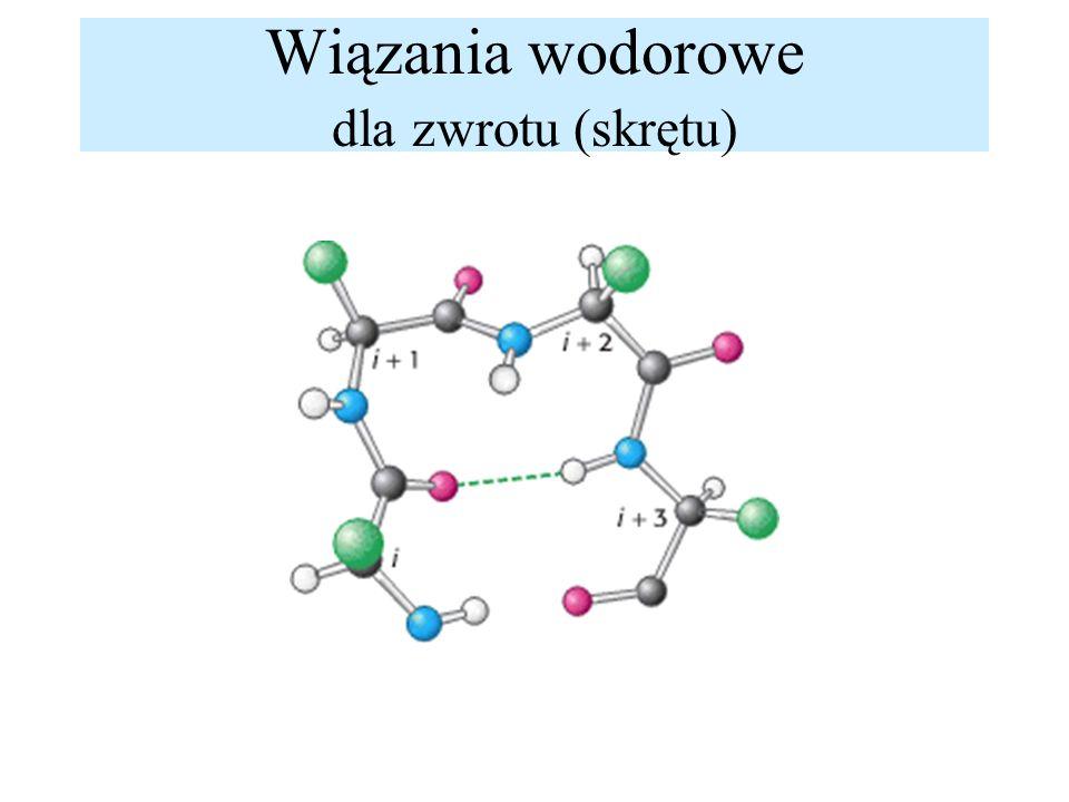 Wiązania wodorowe dla zwrotu (skrętu)