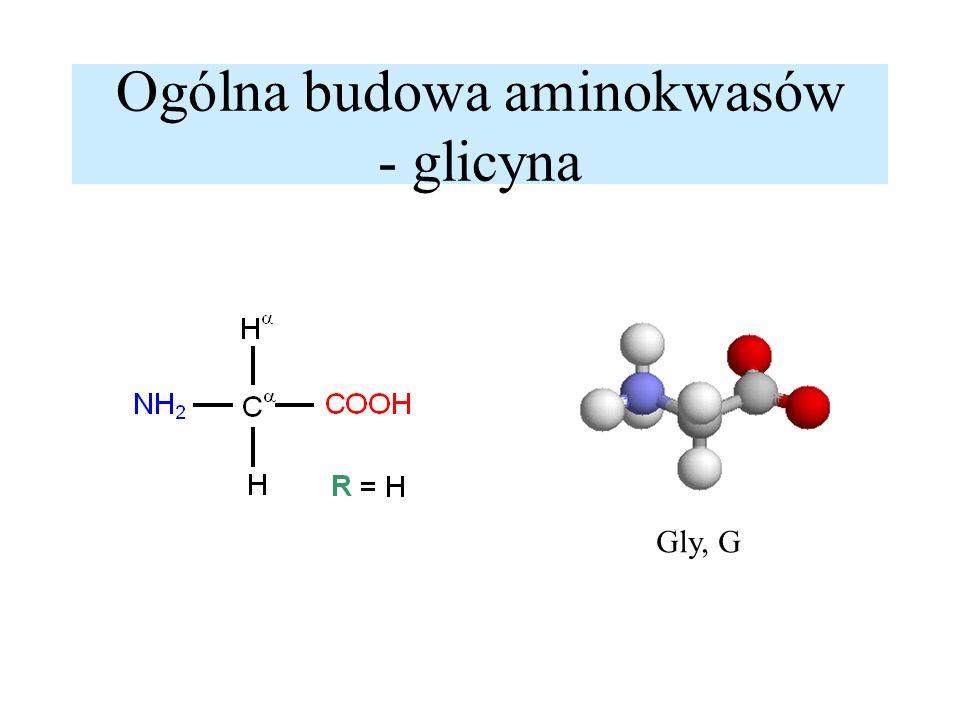 Ogólna budowa aminokwasów - alanina alfa- amiokwasy L - aminokwasy Ala, A