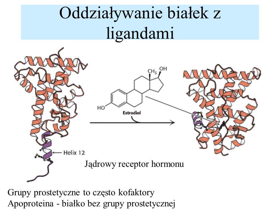 Oddziaływanie białek z ligandami Jądrowy receptor hormonu Grupy prostetyczne to często kofaktory Apoproteina - białko bez grupy prostetycznej