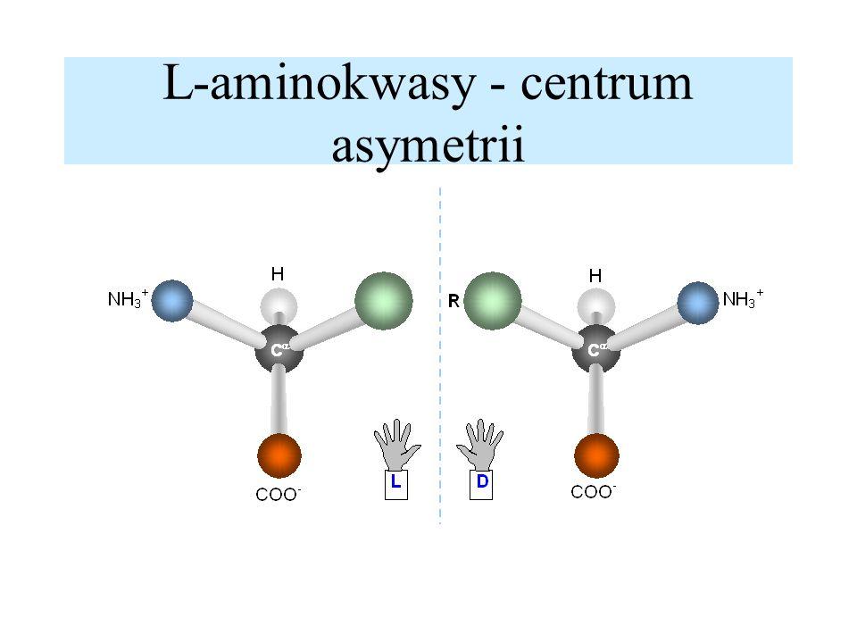 Oddziaływania hydrofobowe -spontaniczne zwijanie białek układ nieuporządkowany - duża entropia (S) układ nieuporządkowany - duża entropia (S)