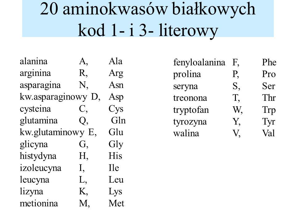 20 aminokwasów białkowych kod 1- i 3- literowy alanina A, Ala argininaR, Arg asparaginaN, Asn kw.asparaginowy D, Asp cysteinaC, Cys glutaminaQ, Gln kw