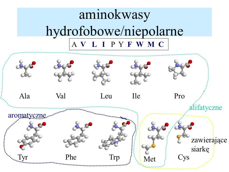 aminokwasy hydrofobowe/niepolarne A V L I P Y F W M C AlaValLeuIlePro TyrPheTrpCys Met alifatyczne aromatyczne zawierające siarkę