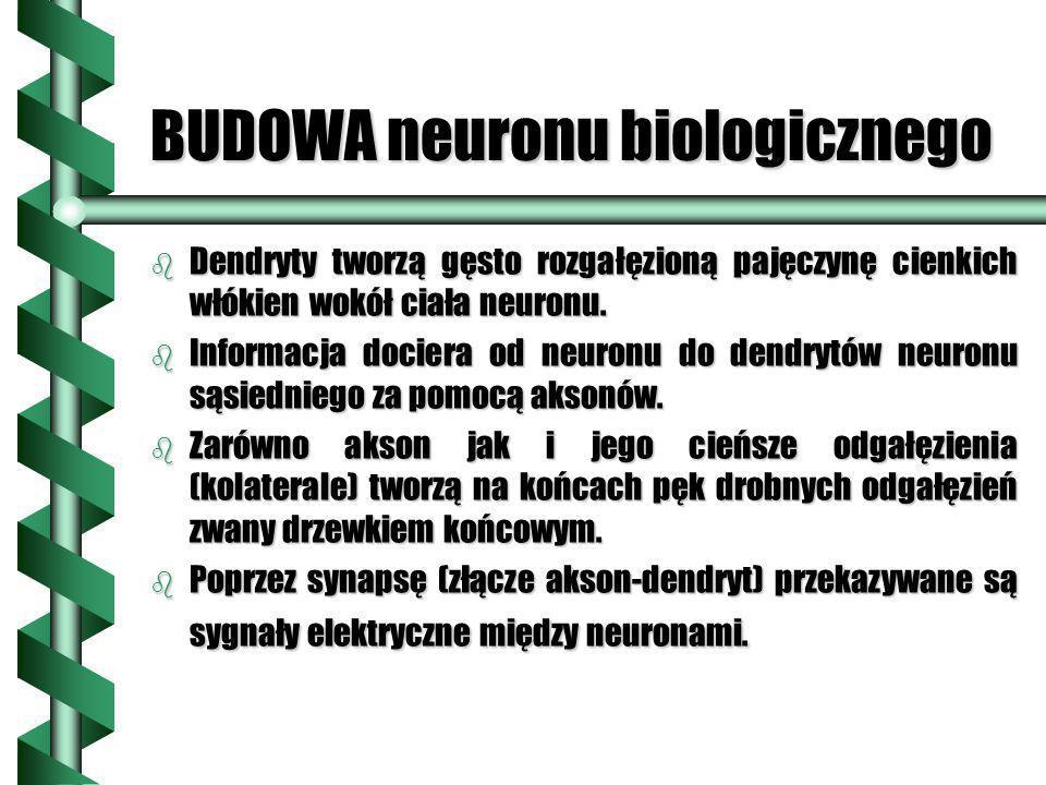 BUDOWA neuronu biologicznego b Dendryty tworzą gęsto rozgałęzioną pajęczynę cienkich włókien wokół ciała neuronu. b Informacja dociera od neuronu do d