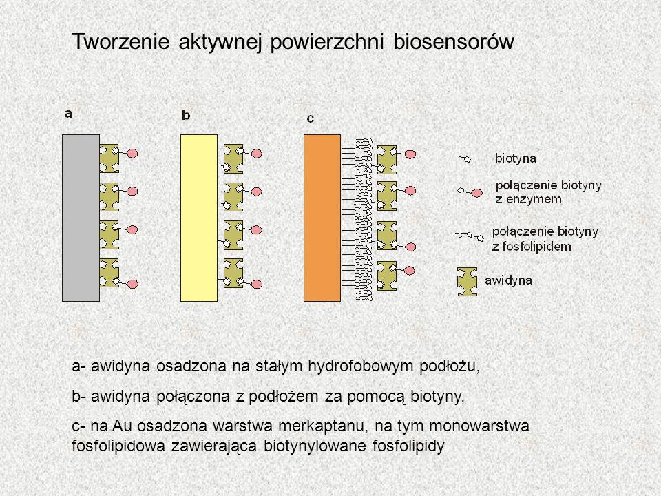 a- awidyna osadzona na stałym hydrofobowym podłożu, b- awidyna połączona z podłożem za pomocą biotyny, c- na Au osadzona warstwa merkaptanu, na tym mo