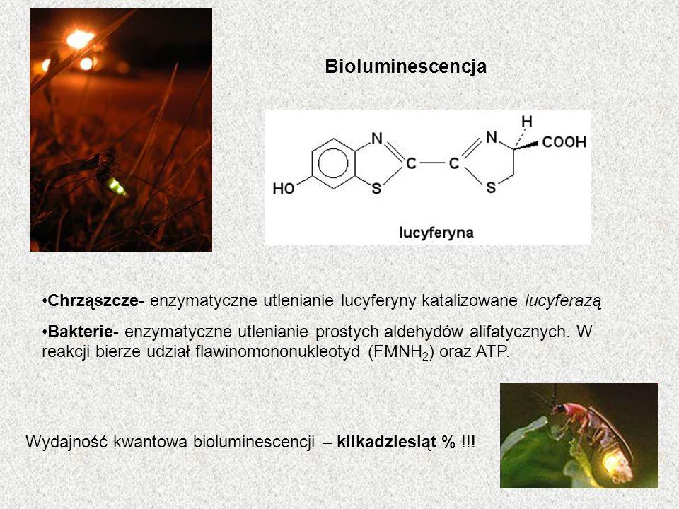 Bioluminescencja Chrząszcze- enzymatyczne utlenianie lucyferyny katalizowane lucyferazą Bakterie- enzymatyczne utlenianie prostych aldehydów alifatycz